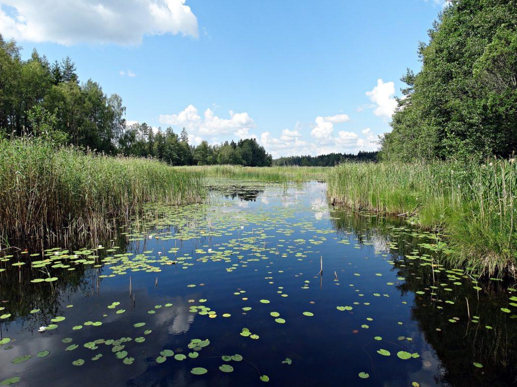 lac roselière